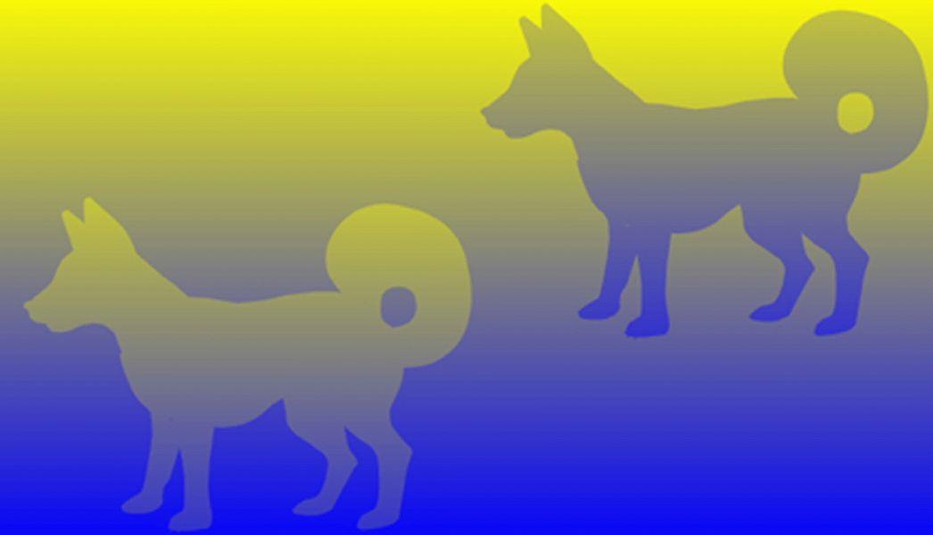 yellow-blue-dogs-big