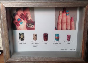 Elaine Krzystowczyk created nail art showcasing different cell types for this assignment.