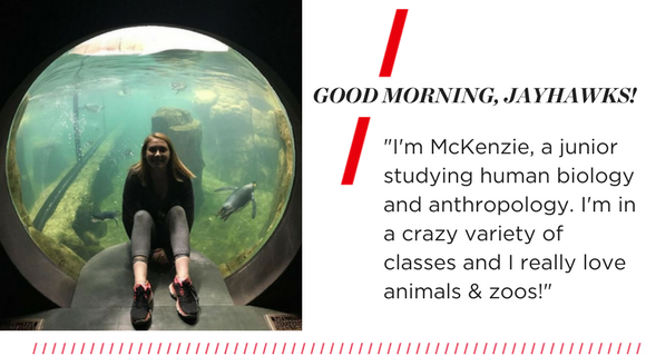 "Good morning, Jayhawks. ""I'm McKenzie, a junior studying human biology and anthropology. I'm in a crazy variety of classes and I really love animals & zoos!"""